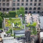 Tetto con giardino 1
